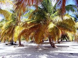 Dominika nyaralás 2020
